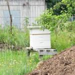 2011 Haliburton Bees Orchard July20