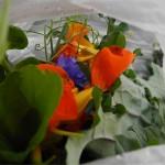 2011 Haliburton CSA Salad Mix July20