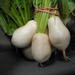 2011 Haliburton CSA Salad Turnips 20 July