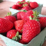 Haliburton farm strawberries