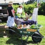 Shopping Barrow at Comox Valley Farmers Market