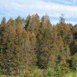 Forest near Merritt