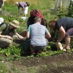 Preservation Farm harvest