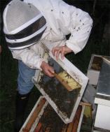 Beekeeping31beebrush.jpg