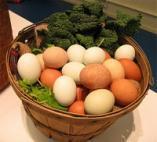 Eggs1.jpg